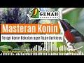 Masteran Audio Terapi Dan Relaksasi Konin Suara Hutan Habitat Konin  Mp3 - Mp4 Download