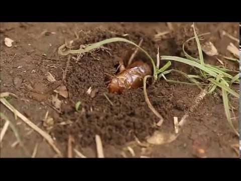 幼虫 土から出る
