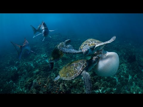 Why Plastic bags are killing our marine life.