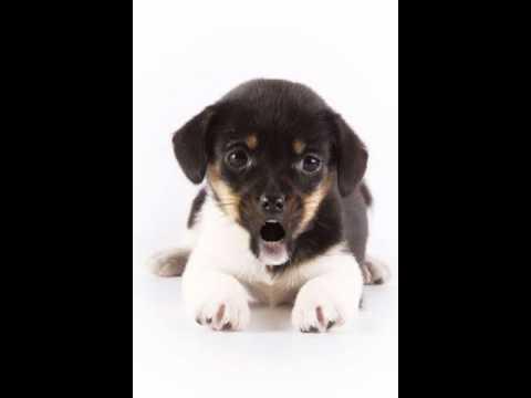 Augurida Cani Youtube