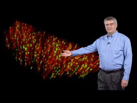 David Drubin (UC Berkeley) 3: Actin dynamics and endocytosis in mammalian cells