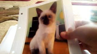 Обзор на паспорт кошки