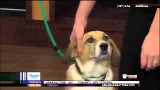 Pet Of The Week: Gable