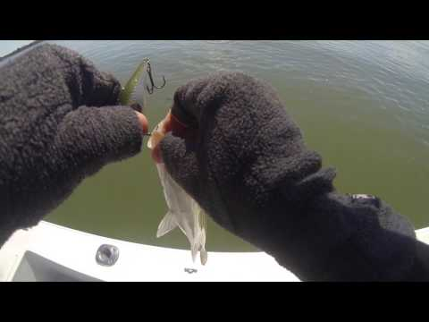 Spring Fishing For Striped Bass On The Chesapeake Bay