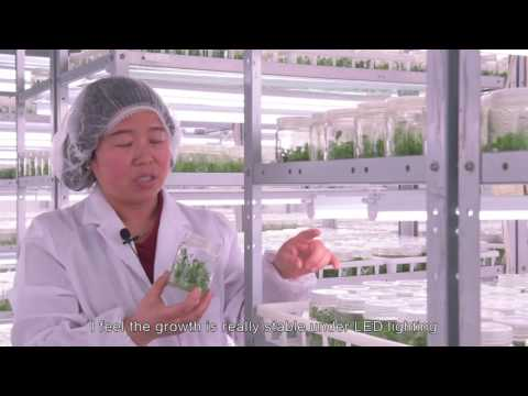 Improve efficiency, keep quality and quantity - Xing Hui Seedling, China (English subtitles)