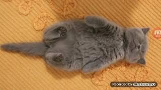 Ну очень  спящий котёнок)))))