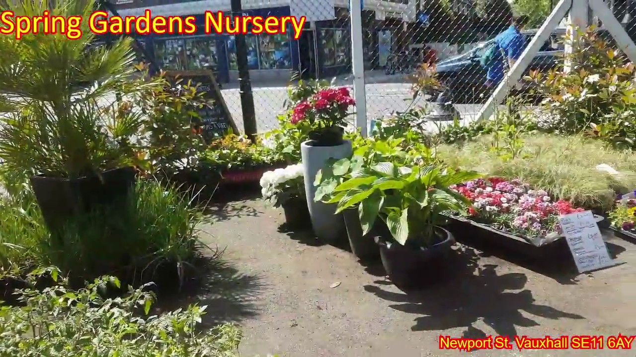 Spring Gardens Nursery May 2018