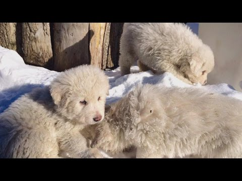 3 Ridiculously Adorable Puppies Found Alive After Avalanche That Killed 7