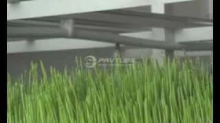 AgriTom   Hızlandırılmış Hidroponik Yetiştirme Sistemi