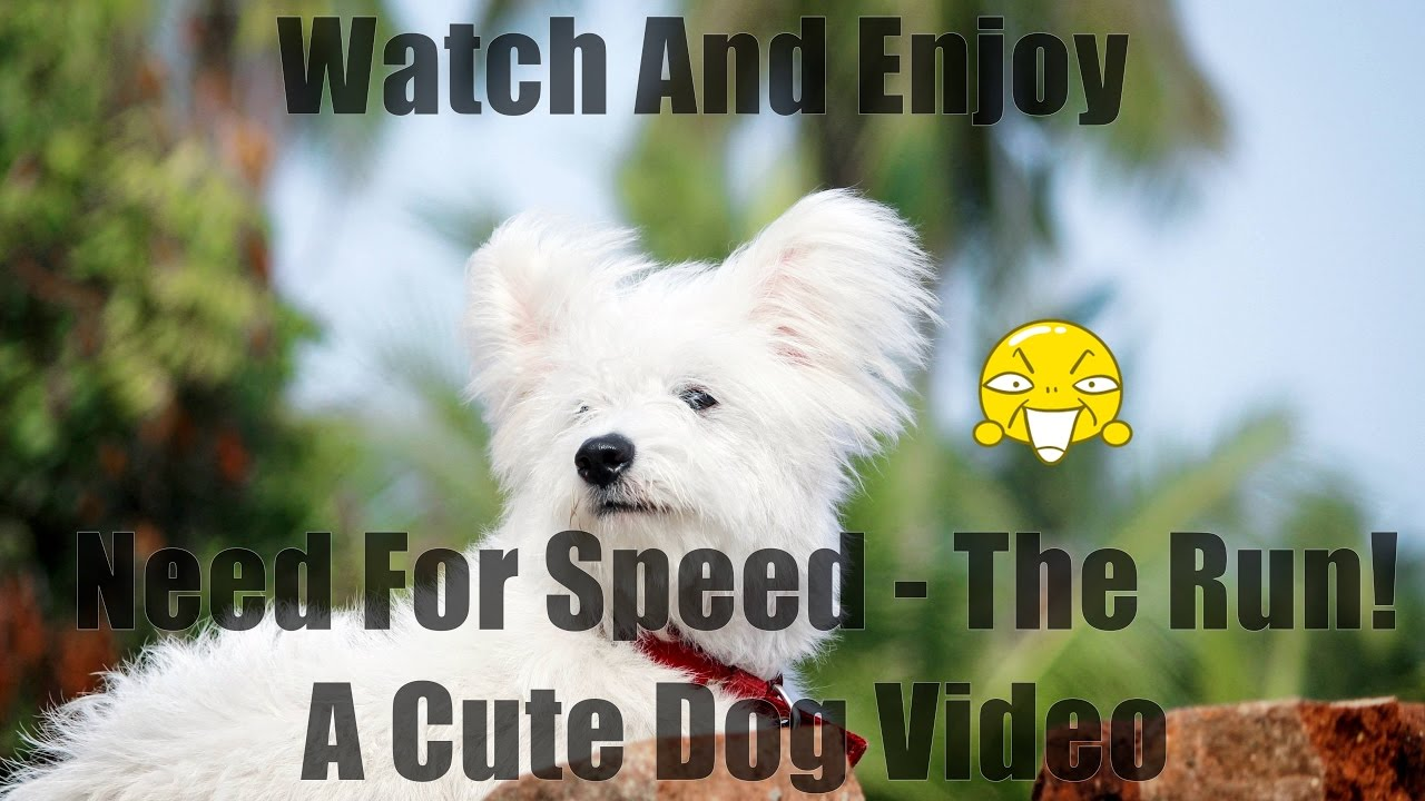 Need For Speed The Run A Cute Dog Video Youtube