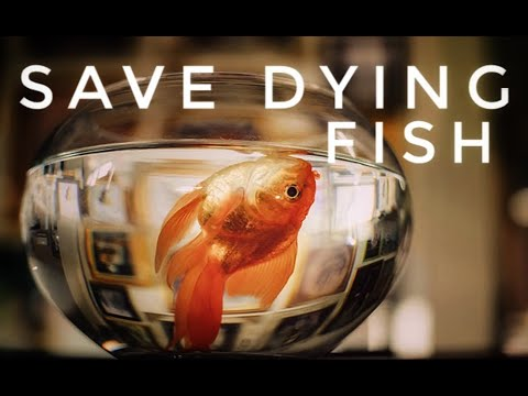 How To Save Dying Fish Or Injured Fish : How To Save Fish Life ((in Hindi))