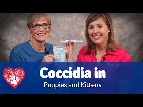 Coccidia in Puppies and Kittens