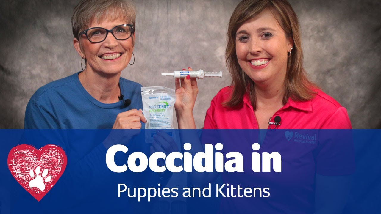 Coccidia In Puppies And Kittens Youtube