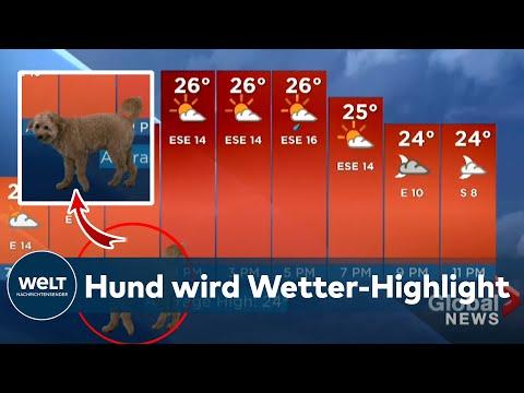 """DIE SHOW GEKLAUT: Wie sich Hund """"Storm"""" ins Wetter-Studio eingeschlichen hat"""