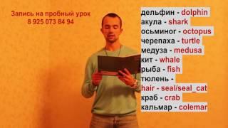 английский язык - морские животные