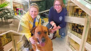 Hank's Visit to the Doggie Store by Dr. Amy Kabel