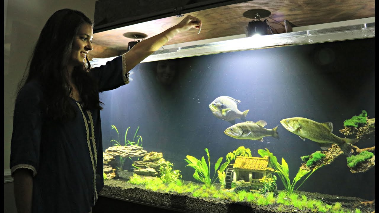 Hand feeding our pet bluegill and bass youtube for Bluegill fish tank