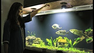 Hand Feeding Our Pet Bluegill and Bass!!
