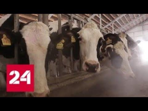 """""""Меркурий"""" защитит от контрафакта: в РФ появится новая система учета молочной продукции - Россия 24"""