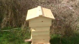 Пчеловодство в Англии. Пасека молодого пчеловода.