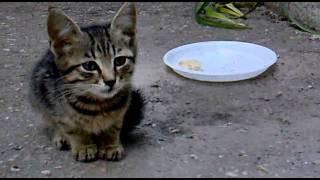 Котята кушают.mp4