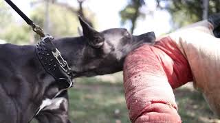 Great Dane, great work! Watch where a Really big dog runs!