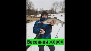 ВЕСЕННИЙ ЖЕРЕХ Спиннинг зимой