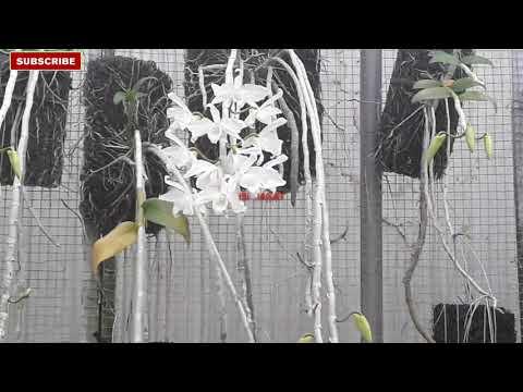 Kebun Anggrek Bayeman Magelang