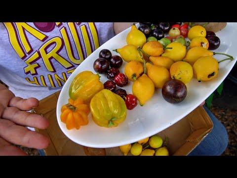 KERABAT HANTU - Hann x Kyodai Taiga (Sneak) Lirik 🔥🔥 from YouTube · Duration:  3 minutes 7 seconds