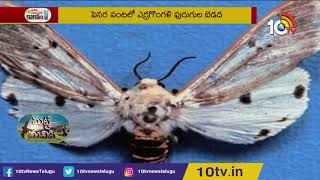 Prevention of Red Caterpillar In Pesara Crop | Matti Manishi  News