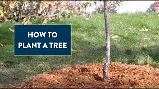 How to Plant a Tree - audio described