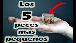 Los 5 peces mas pequeños del mundo/ Smaller fish in the world