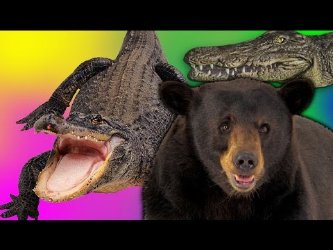 GATOR PARTY! | Bear Simulator #7