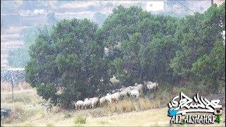 رسالة إلى قطاع الأشجار.... اتقوا الله في هذه الحيوانات الضعيفة