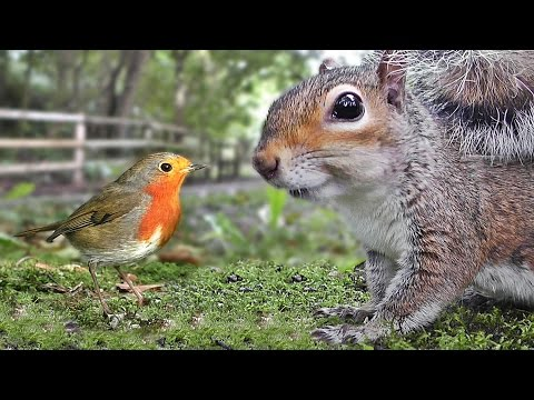 Videos for Cats to Watch – Birds and Squirrels Being Awesome NEW