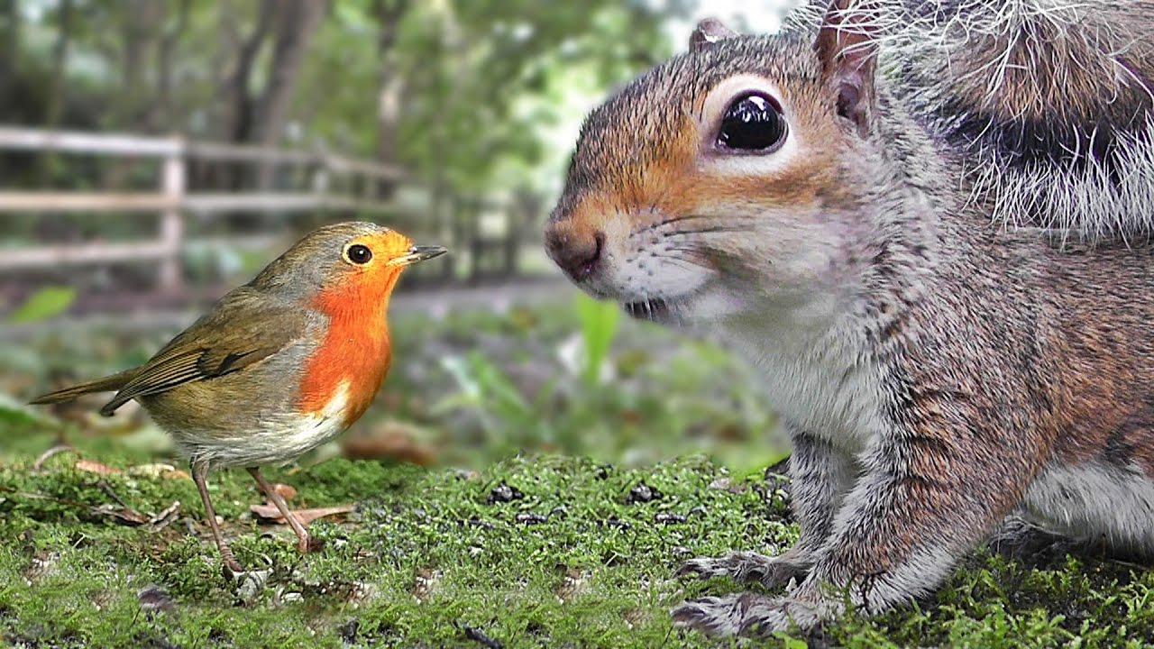 「Birds & Squirrels」的圖片搜尋結果