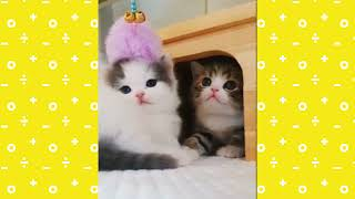 Funny And Cute Kittens Playing Together Compilation  Try Not To Laugh