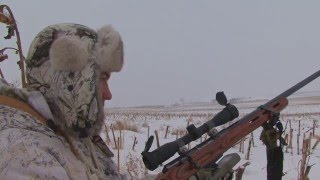 North Dakota Coyote Hunting:  Early February Poke