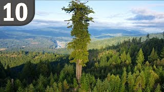Top 10 LARGEST Trees Ever Found