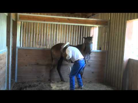Working a yearling