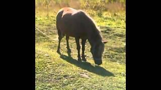 Фотосессия с лошадьми. 1 часть.
