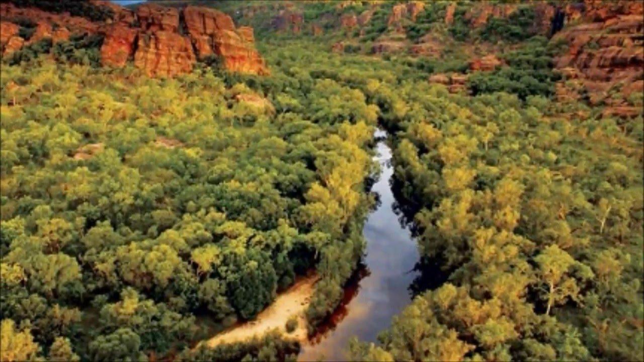 Las 5 selvas mas peligrosas del mundo youtube - Mas goy fornells de la selva ...
