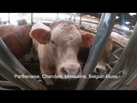OUR BIG MOVE! farming in France| calving and livestock