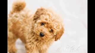 Top 20 Cutest Dog Breeds While Puppies