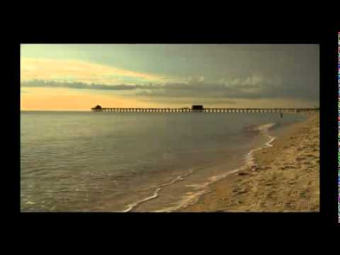 Trumpeting sounds heard worldwide - venice florida jan 2012