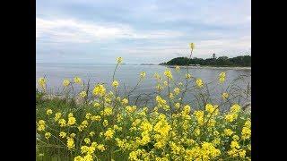 Геленджик. Погода 12 мая 2019г. Искупался в открытом море и узнал температуру воды