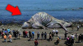 GIGANTYCZNE stwory które naprawdę ISTNIEJĄ!