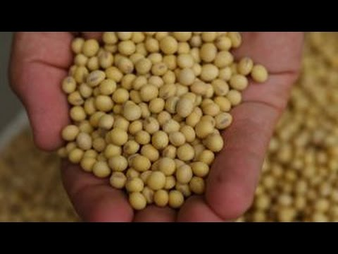 Food Fight: GMOs vs Non-GMOs