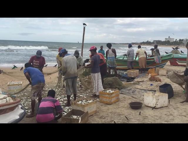 Visvangst van de vissers in Negombo