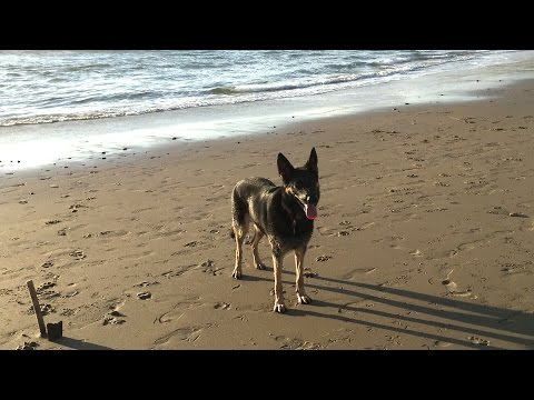 DOG CATCHES FRISBEE IN SLOW MOTION - PURE TALENT!!